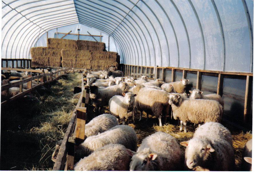 Livestock Shelters (1/4)