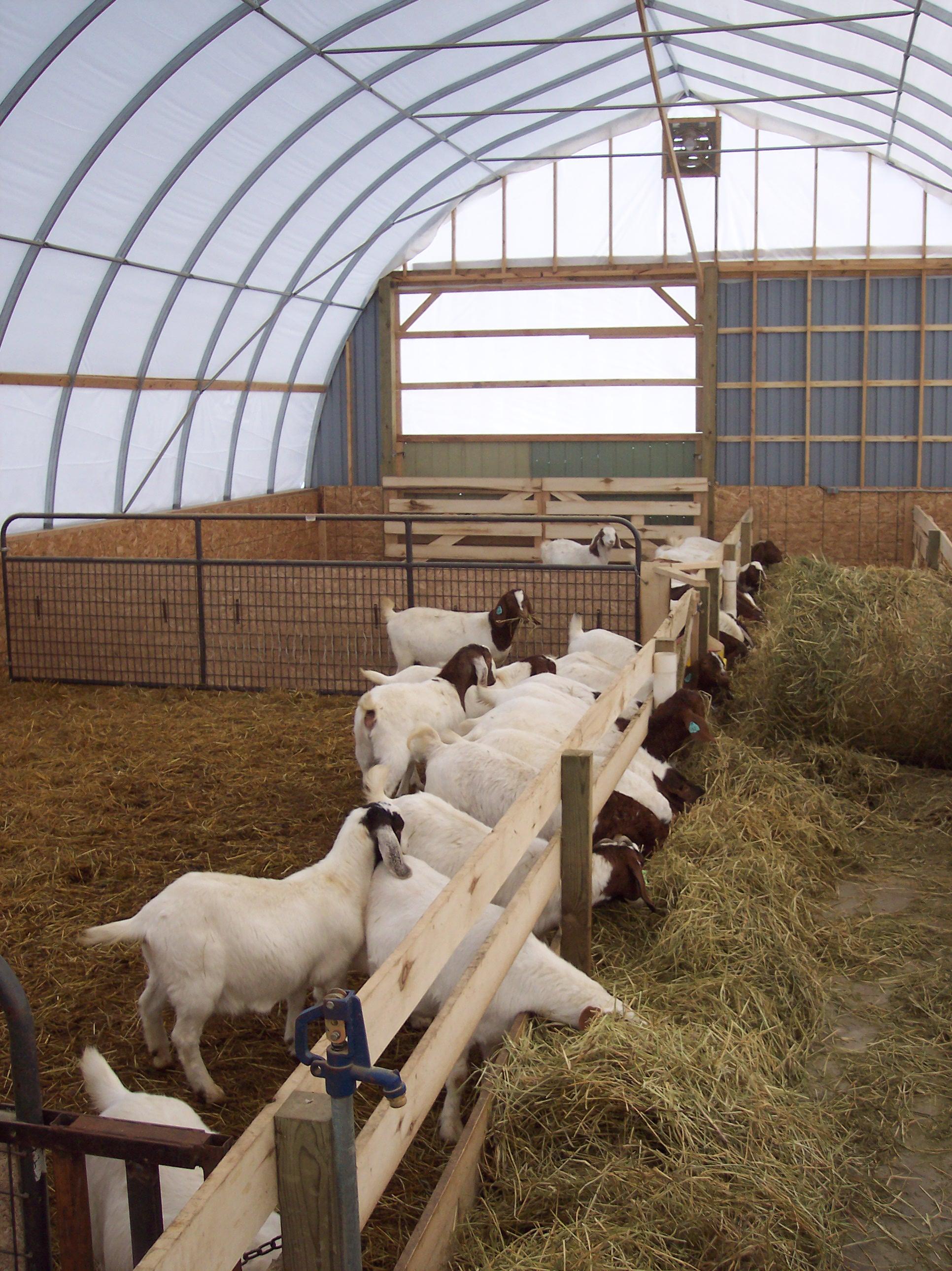 Metal Goat Shelters : Livestock shelters multi shelter solutions