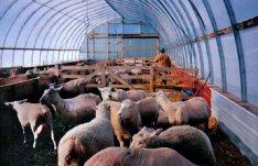 happy sheep & equal happy farmer