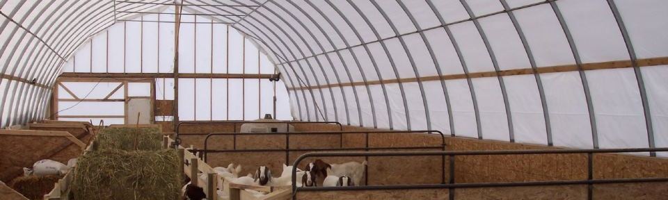 goats happy in a shelter