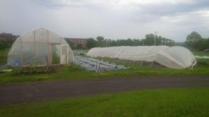 east coast greenhouses