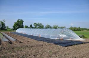 hanley tunnel greenhouse