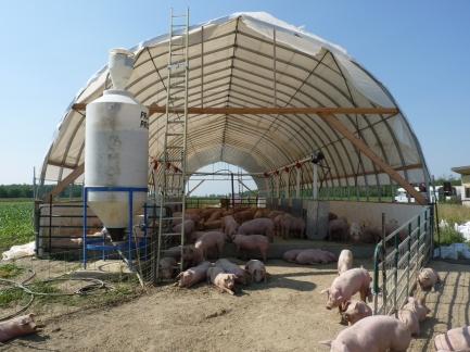 pigs on blocks P1000002